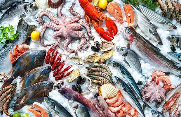 ăn bạch tuộc có mập không, ăn hải sản có béo không, ăn hải sản có mập không, ăn bạch tuộc có béo không, ăn hải sản ban đêm có mập không, ăn cua có mập ko, hải sản có béo không, bạch tuộc bao nhiêu calo, ăn nhiều hải sản có béo không, ăn hải sản nhiều có mập không, ăn hải sản có tăng cân không, ăn cua có béo k, ăn mực có béo không, ăn mực có mập ko, ăn hải sản mập không, béo không, có mập không, ăn ghẹ có béo không, ăn hải sản có béo ko, ăn cua có mập không, có béo không, ăn cá có béo không, bạch tuộc chứa bao nhiêu calo, hải sản bao nhiêu calo, ăn nhiều nhưng không mập, ăn cua có tăng cân, ăn cua có béo ko, ăn tôm luộc có mập không, ăn hàu có béo không, ăn mực có béo ko, 100g bạch tuộc bao nhiêu calo, ăn hàu nướng có béo không, lượng calo trong hải sản, ăn tôm có mập ko, ăn bạch tuộc sống có tốt không, ăn mực có tăng cân không, ăn hải sản có mập ko, calo trong hải sản, hải sản, ăn hải sản sống , ăn ghẹ có mập, ăn nhiều cá có béo không, ăn cá có tăng cân không, ăn bạch tuộc có tốt không, ăn cá nhiều có béo không, ăn cá nướng có mập không, ăn hải sản béo không, ăn hải sản buổi tối có tốt không, ăn cá có mập không, ăn tôm có béo không, ăn khô mực có mập ko, ăn tôm có mập không, ăn hải sản nhiều có tốt không , béo lên, ăn mực có tốt không, ăn cá kho có béo không, ăn nhiều không mập, 100g cá hồi bao nhiêu calo, ăn hải sản, bạch tuộc giá bao nhiêu, bạch tuộc sống ở đâu, ăn gỏi cá hồi có tốt không, hai san, cách làm bạch tuộc sống, các món nhậu hải sản, ăn ốc nhiều có tốt không, , bạch tuộc, món hấp, ăn hải sản có béo k, ăn hải sản giảm cân, ăn hải sản giảm béo, ăn hải sản có giảm cân không, ăn hải sản có giảm cân, ăn hải sản nhiều có giảm cân không, giảm cân có nên ăn hải sản, giảm cân có được ăn hải sản, giảm cân có được ăn hải sản không